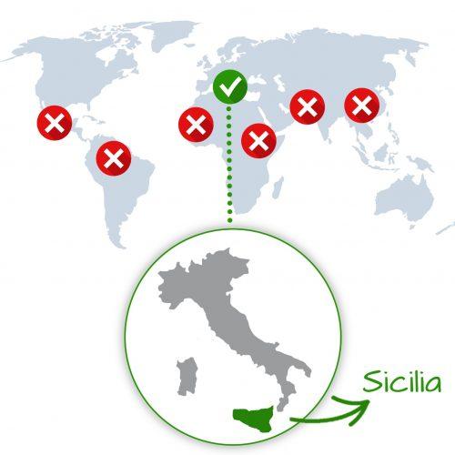 provenienza aloe arborescens sicilia
